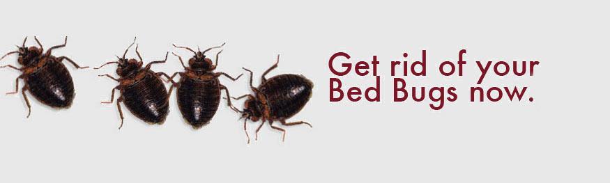 bedbug-exterminator-NY