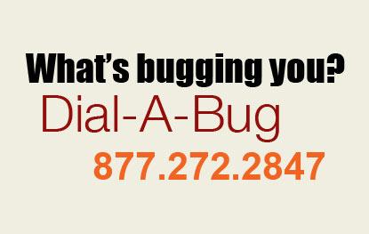 dial-a-bug-ny